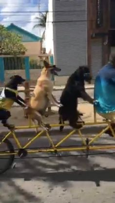 Funny Vid, Funny Dogs, Cute Dogs, Cute Animal Videos, Funny Animal Pictures, Cut Animals, Animals And Pets, Beautiful Dogs, Animals Beautiful