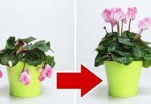 Εάν τα λουλούδια σας έχουν μαραθεί, μην τα πετάξετε: αυτά τα 3 συστατικά το ξαναζωντανεύουν, αποδεδειγμένα λειτουργεί! Nail Swag, Home Design, Garden Planters, Planter Pots, Rose Trees, Blooming Flowers, Flowers Garden, Houseplants, Garden Landscaping