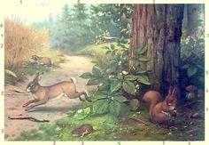 Eekhoorn of Sciurus vulgaris