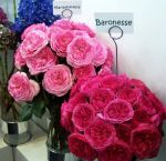 Garden Roses for Sale	  http://www.wholeblossoms.com/wholesale-roses/garden-roses.html
