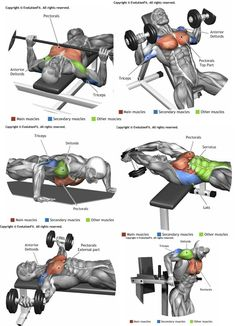 Upper-back weight exercises Fitness Workouts, Gym Workout Tips, Weight Training Workouts, Biceps Workout, Bike Workouts, Swimming Workouts, Swimming Tips, Cycling Workout, Shoulder Workout Routine