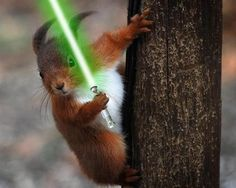 """Red Squirrel Jedi.  Haha!  """"Your nuts or your life!"""""""
