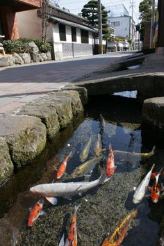 A street canal in Japan so clean they even have koi in it : interestingasfuck Japan Tourism, Japan Landscape, Japan Street, Pond Design, Tokyo Travel, Fish Ponds, Visit Japan, Japanese Streets, Land Scape
