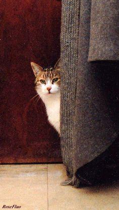 Cat Shy Sarah...