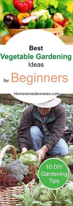 DIY Best Vegetable Gardening Ideas for Beginners #gardenideasforbeginners