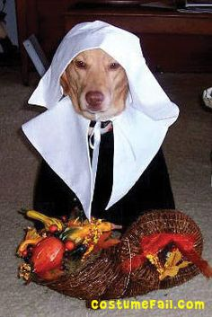 Thanksgiving dog.  This is just weird and cruel.  Who has this kind of time on their hands?