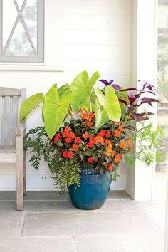 Add a Tropical Punch to eden garden layout 125 Container Gardening Ideas Diy Gardening, Organic Gardening, Flower Gardening, Planting Flowers, Container Gardening Vegetables, Garden Container, Succulent Containers, Vegetable Gardening, Full Sun Container Plants