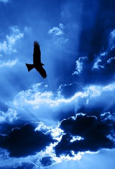 Photo about Eagle flying in front of a sky with beams of sunlight coming through clouds. Image of clouds, raptor, sunlight - 10652891 Le Grand Bleu, Bleu Indigo, Blue Aesthetic, Beautiful Sky, Belle Photo, My Favorite Color, Deep Blue, Shades Of Blue, Blues
