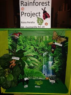 Rainforest Diorama #schoolproject#arts#crafts