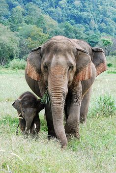 Elephant with her young calf - I want to hang out with elephants.