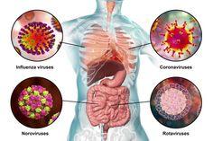 Coronavirus COVID-19 : comment le différencier de la grippe ou du rhume ? Influenza Virus, Label Image, Science Photos, Health Advice, Venom, School Tips, Chinese, Cell Membrane, Muscle Soreness