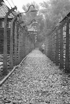 between the barbed wire fence of the camp at auschwitz ...