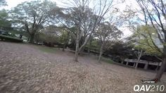 Crazy fast FPV through trees