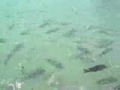 Porto de Galinhas - Piscinas naturais - YouTube