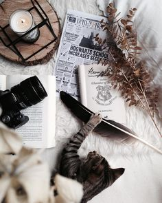 I brought a cat with me to Hogwarts ; instead of an owl Harry Potter Aesthetic, Book Aesthetic, Aesthetic Collage, Flat Lay Photography, Fall Wallpaper, Hermione Granger, Ravenclaw, Bookstagram, Reading