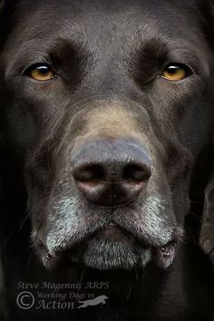The golden eyes combined with the hair color and the features of this face suggests this is a German Shorthaired Pointer.