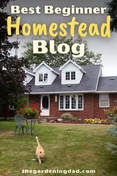 Find your ultimate guide to homesteading with the Best Homestead Blog! This blog will provide you with everything you need to live off your land with easy to follow instructions, tips, tricks, and garden ideas. #homestead #homestead #gardening #garden Homesteading Blogs, Urban Homesteading, Raising Chickens, Diy Patio, New Friends, Garden Ideas, Finding Yourself, Dads, Herbs