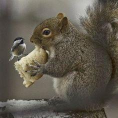 Sharing...