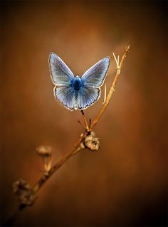 """Literature and butterflies are the two sweetest passions known to man.""   Vladimir Nabokov"