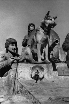 """warhistoryonline: """" Can you name this most famous World War 2 dog in Russia guys? http://wrhstol.com/1Xc7X0J """""""