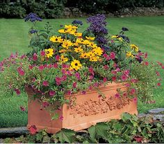garden container with eye-catching annuals--trailing Calibrachoa Million Bells® 'Cherry Pink', bright golden Rudbeckia hirta 'Toto', and dark purple Heliotropium 'Fragrant Delight'