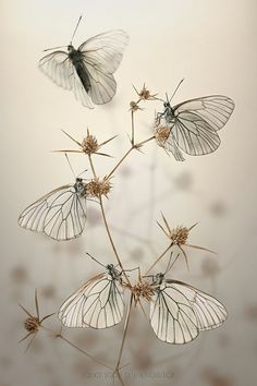 butterflies by Carla Kathryn Cope