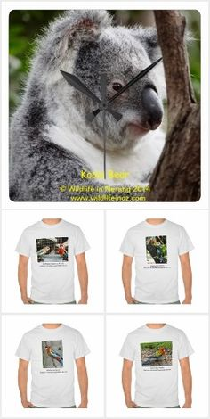 Variety of gifts suitable for Xmas and birthdays based on wildlife that can be found on the Gold Coast in Queensland Australia. Many of the photos used are of wildlife visitors where we live in Nerang in the Gold Coast hinterland. High School Days, Gold Coast, Clocks, Wildlife, Bear, Gifts, Animals, Presents, Animales