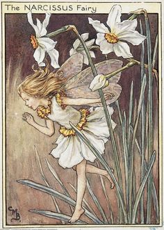 Illustration for the Narcissus Fairy from Flower Fairies of the Garden. A girl fairy runs from a group of narcissus on the right, with her hand raised, calling out.  										   																										Author / Illustrator  								Cicely Mary Barker