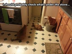 The mystery of the stove…