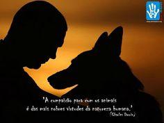 http://www.scrapsdinamicos.com.br/imagens/frases-sobre-os-animais