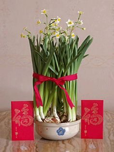 chinese-new-year-lunar-celebrations-decorations-festival