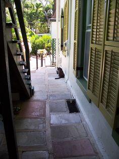 HemingwayAlleyCat - Ernest Hemingway House - Wikipedia, the free encyclopedia