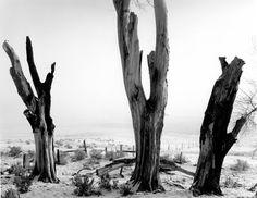Mis ojos ven...: Ansel Adams - Grandes Fotógrafos - Great Photographers Ansel Adams Photography, Photography Camera, Creative Photography, Black And White Landscape, Black N White Images, Great Photographers, Landscape Photographers, Ansel Adams Photos, San Francisco Museums