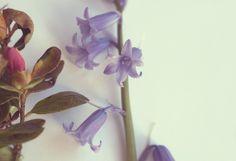 Garden foraged flowers - photo by Mammasaurus