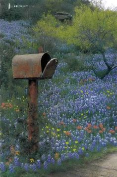 Texas mailbox in the bluebonnets
