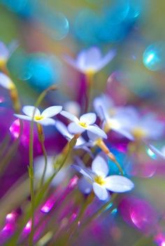 Flowers and rainbows