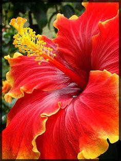 Красивый цветок…