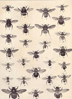 Check out all the different types of bee species!  Call A1 Bee Specialists in Bloomfield Hills, MI today at (248) 467-4849 to schedule an appointment if you've got a stinging insect problem around your house or place of business! Visit www.a1beespeciali... for more information!