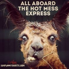 All aboard the HOT MESS express! | @theiambrand   http://www.iamfunnyshirts.com/hot-mess-funny-quotes/