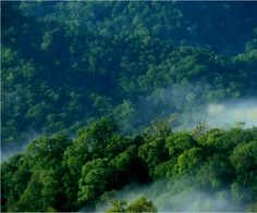 Selva de la Mosquitia, Honduras