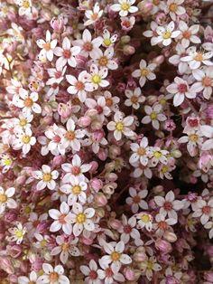 kwiatuszkarnia