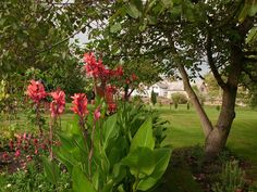... Flowers, Plants, Plant, Royal Icing Flowers, Flower, Florals, Floral, Planets, Blossoms