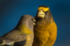 Henry sat stunned as he learned why he should NEVER again take the first seed! Funny Photography, All Birds, Bird Art, Fine Art America, Wildlife, Artist, Nature, Animals, Naturaleza