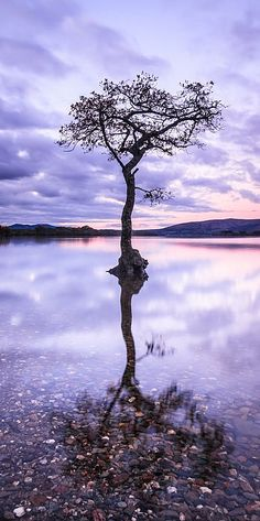 Reflection - Fine Art Print by Lynne Douglas Loch Lomond in Scotland at the end of a beautiful day. This tiny tree is surrounded by water but still stands proudly with it's beautiful reflection in the crystal clear water.  #water #tree #loch #scotland #scottish #landscape #photography #pastel #pink #home #print
