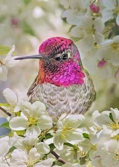 TOP 3 Pretty Birds Emerald Starling White cardinal Amongst the Snowy Blossoms - Hummingbird Pretty Birds, Love Birds, Beautiful Birds, Animals Beautiful, Cute Animals, Small Birds, Little Birds, Colorful Birds, Hummingbird Pictures