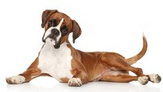 Free dog obedience training tips - Specialized site for training dogs Dog Breeds That Dont Shed, Top Dog Breeds, Dog Breeds List, Best Dog Breeds, Family Friendly Dogs, Friendly Dog Breeds, Best Dogs For Kids, Most Cutest Dog, Overweight Dog