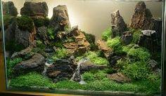 Expert Advice on Aquascape in the Tropical Fish Aquarium - Aquarium Fish Advisor
