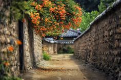 Old town - It's a traditional house town where is famous for trumpet creeper, in Daegu, Korea.