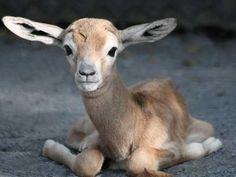 storymaker-cutest-baby-animal-pics-1212219-515x388.jpg 516×388 pixels