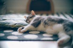 Sleeping Kitty | Flickr – 相片分享!